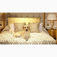 Отель, гостиница для животных, передержка собак
