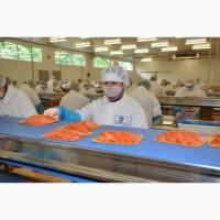 Рабочие на производство рыбной продукции в Польшу