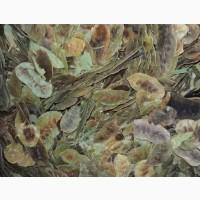 Сенна (листья и плоды) 100 грамм