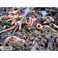 Натуральное органическое удобрение Биогумус(10литров)-25грн