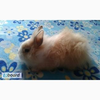 Продам декоративного кролика )