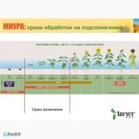 Эффективные гербициды на подсолнух - Сальса, Миура, Селект, Зеллек Супер, Центурион