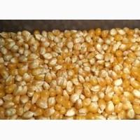 Продам кукурузу фуражную FOB 50000 МТ