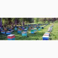Продам пчелопакеты породы Карпатка начало Мая Днепр 2019