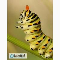 Лепидоцид биопрепарат против насекомых - вредителей