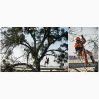 Спил аварийных деревьев в Харькове