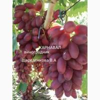 Саженцы и лоза Новых перспективных сортов винограда