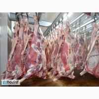 Говядина, свинина полутуши от производителя 1,2 категории