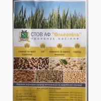 Продам насіння зернових культур