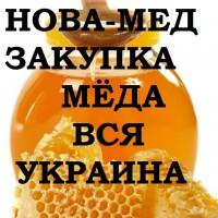 Куплю мёд с РАПСА и ПОДСОЛНУХА. Вся Украина