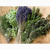 КУПЛЮ (СУХИЕ) лекарственные травы и растения ОПТОМ