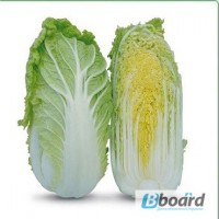 Семена пекинской капусты KS 399 F1 (Китано)