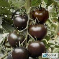 Продам семена Томат Черный Мавр