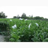 Табак Басма Джебел семена, табак нарезка лапша 1мм и ещё 25 лучших сортов
