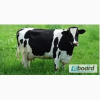 Комбикорм, корм для коров, бычков, КРС