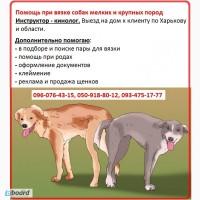 Помощь при вязке для крупных и мелких собак. Срочный выезд инструктора кинолога Зоотакси