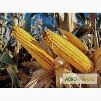 Посевной материал Кукуруза Муасон Оргинатор Семанс Франция