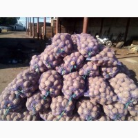 Картофель 2019 г. Оптом цена 7 грн доставка по всей Украины