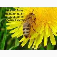 Куплю МЕД без антибиотиков Баштанка и соседние районы Николаевской области