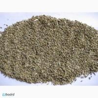 Фенхель семена сорт Черновицкий, чистота 99%