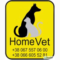 Home Vet» услуги для животных на дому