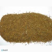Рыжик семена, сорт Юбиляр, Camelina sativa