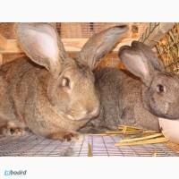 Комбикорм, корм для кроликов в Одессе, от 1, 5месяцев, откорм, для кролематок, лактирующих