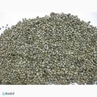 Конопля техническая семена, сорт ЮСО-31