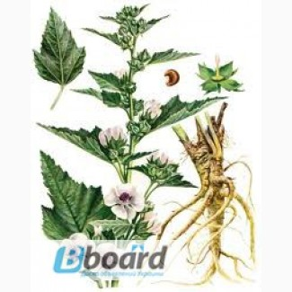 Купить корень алтей лекарственный