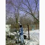Предлагаем профессиональную обрезку деревьев