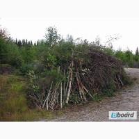 Работа в Чехии без квалификации (очистка леса)