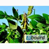 Реализуем Семена сои толерантной к гнрбициду со сроком вегетации 87, 95, 105, 115 дней