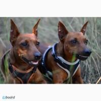 SMART-DOG Одесса. Профессиональное обучение Вашей собаки - наша задача
