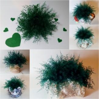Нептунус (стабілізовані водорості)