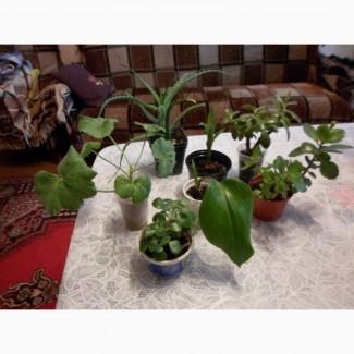 Комнатные растения Набор из 6 растений