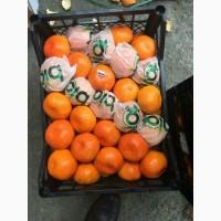 Мандарины Турецкие опт цена 18 грн (1 сорт)