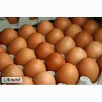 Яйцо куриное оптом от производителя