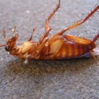 Средство от тараканов и муравьев