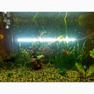 Новые погружные лампы для аквариума