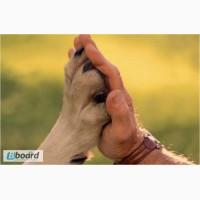 Скорая ветеринарная помощь! Вызов ветеринара на дом