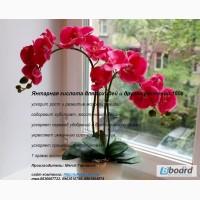 Янтарная кислота для орхидей и других растений 100г