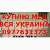 КУПЛЮ МЁД от 500 КГ. Выезжаем своим транспортом по Днепропетровской и СОСЕДНИХ обл