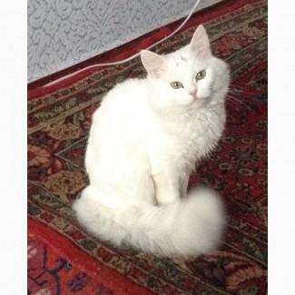 Отдам кота красавца в хорошие руки