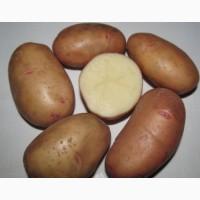 Семенной картофель Тирас I репродукция, отправляем почтой