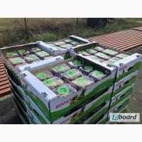 Продаем киви из Греции
