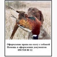 Документы для охотничьих собак - решаем вопросы с оформлением